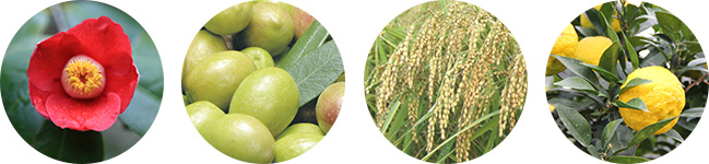 4種の植物オイル